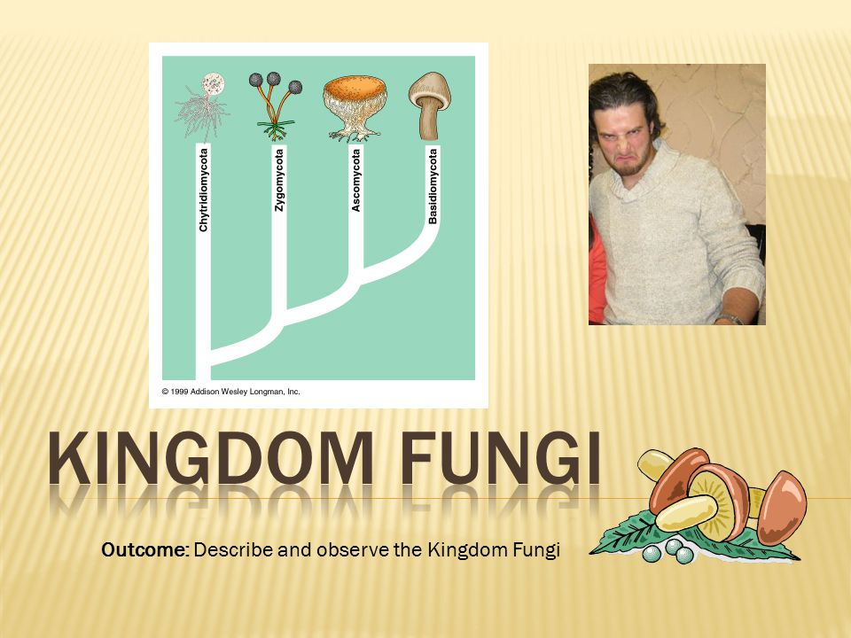  The reproductive structures of fungi that produce spores are called fruiting bodies.