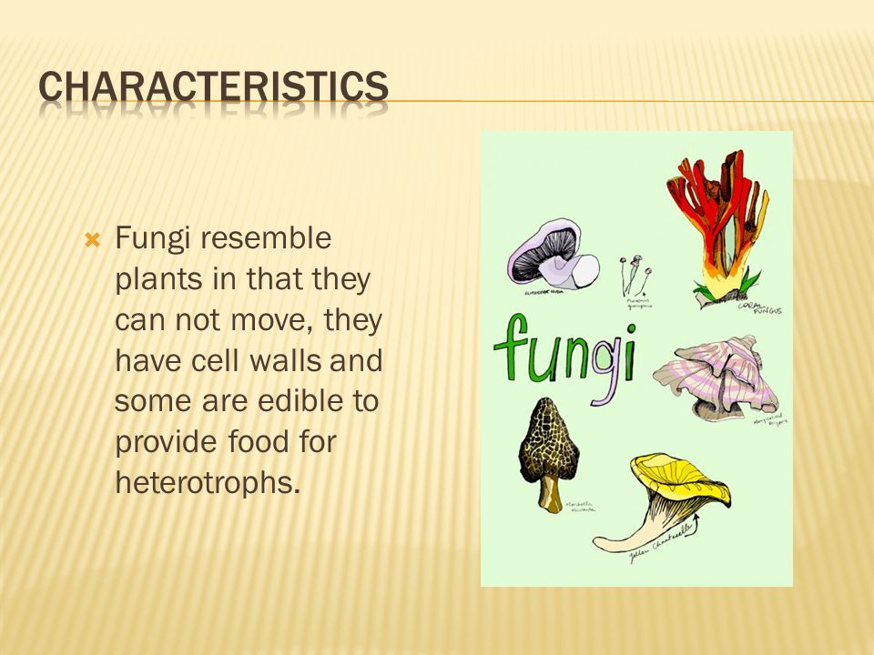  Fungi differ from plants  Lack chlorophyll  Not photosynthetic  Never produce seeds  Cells wall are made of chitin NOT cellulose
