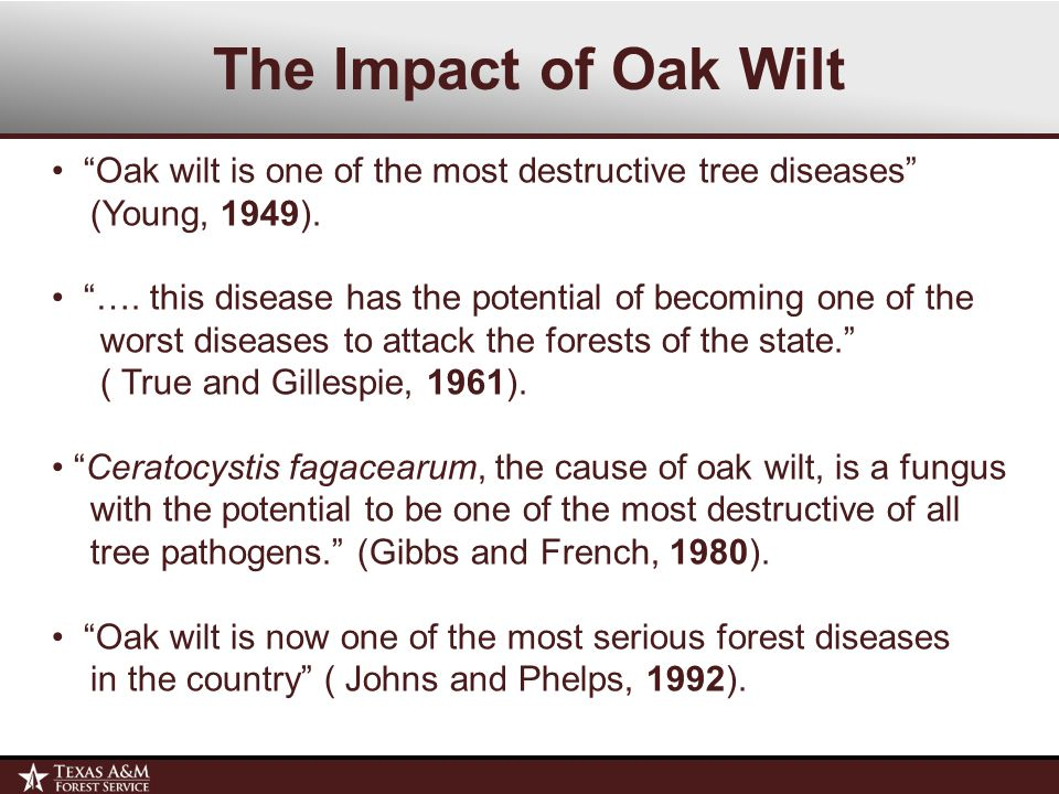 The Impact of Oak Wilt Thousands of acres throughout central and west Texas have been adversely affected by oak wilt.