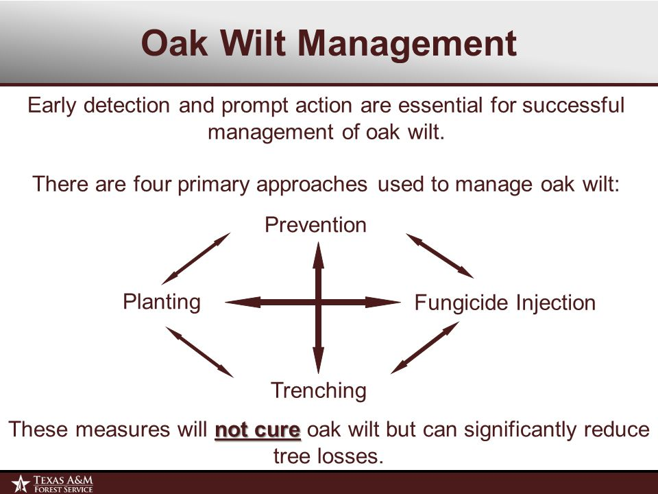 Oak Wilt Management Early detection and prompt action are essential for successful management of oak wilt.