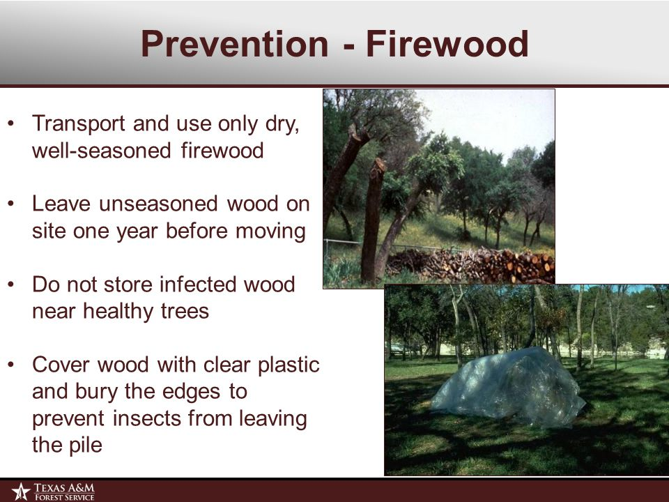 Prevention - Firewood Transport and use only dry, well-seasoned firewood Leave unseasoned wood on site one year before moving Do not store infected wood near healthy trees Cover wood with clear plastic and bury the edges to prevent insects from leaving the pile