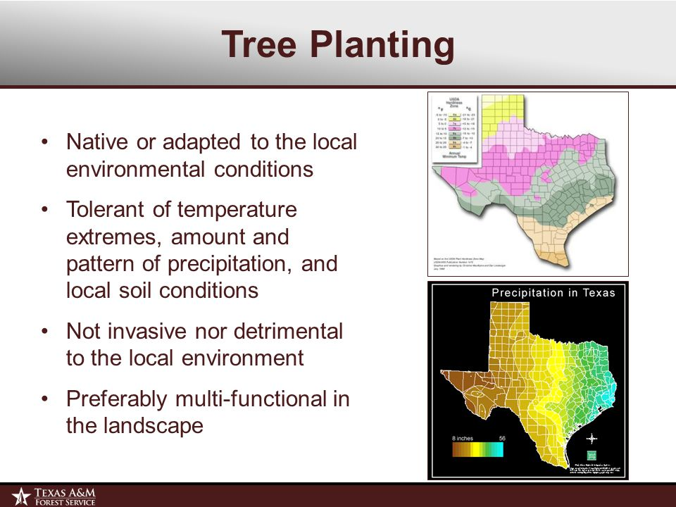 Native or adapted to the local environmental conditions Tolerant of temperature extremes, amount and pattern of precipitation, and local soil conditions Not invasive nor detrimental to the local environment Preferably multi-functional in the landscape Tree Planting