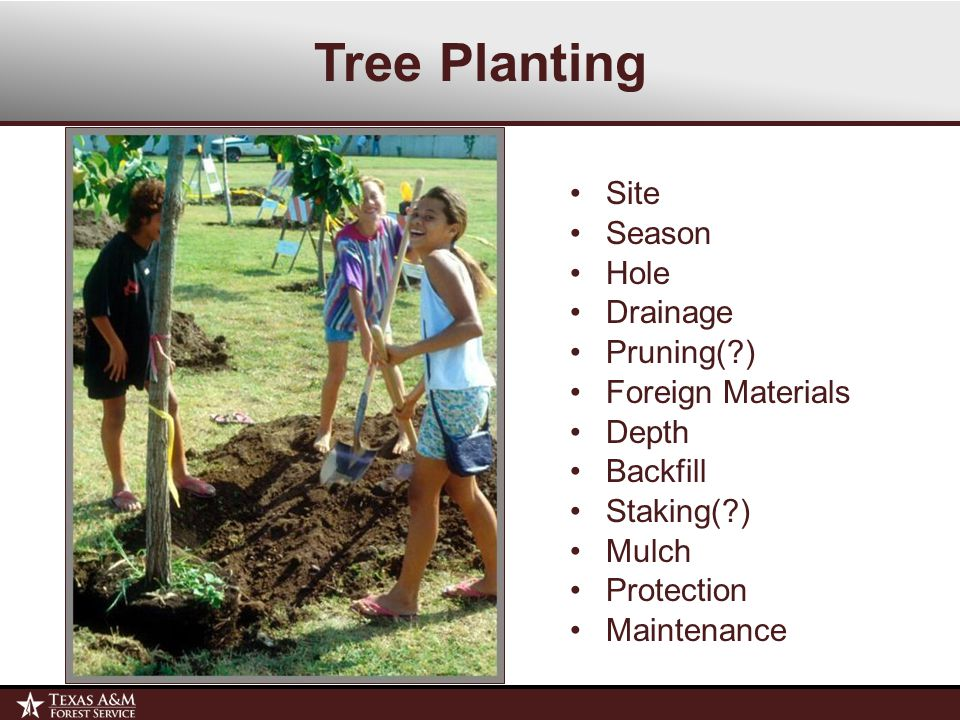 Tree Planting Site Season Hole Drainage Pruning( ) Foreign Materials Depth Backfill Staking( ) Mulch Protection Maintenance