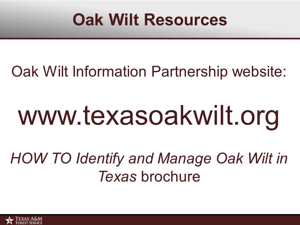 Oak Wilt Information Partnership website: www.texasoakwilt.org HOW TO Identify and Manage Oak Wilt in Texas brochure