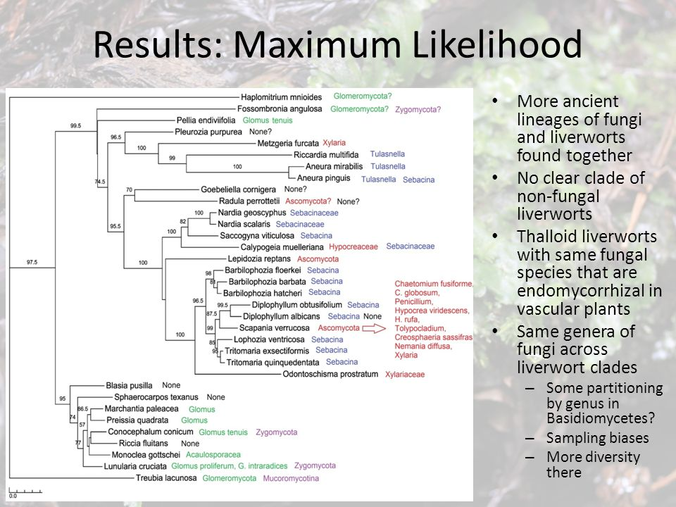 Results: Maximum Likelihood Species isolated from different liverworts similar- more data Suggestion of phylogenetic partitioning by ecosystem roles – E.g.