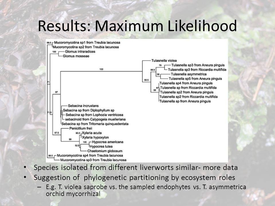 Results: Maximum Likelihood Species isolated from different liverworts similar- more data Suggestion of phylogenetic partitioning by ecosystem roles –