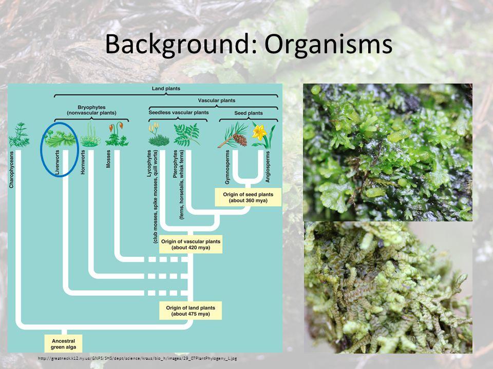 Background: Organisms http://greatneck.k12.ny.us/GNPS/SHS/dept/science/krauz/bio_h/images/29_07PlantPhylogeny_L.jpg