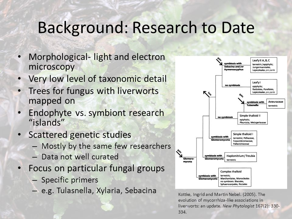 Background: Research to Date Morphological- light and electron microscopy Very low level of taxonomic detail Trees for fungus with liverworts mapped o