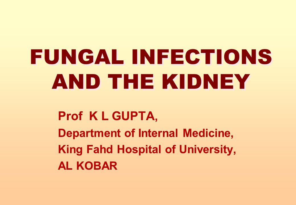 FUNGAL INFECTIONS AND THE KIDNEY Prof K L GUPTA, Department of Internal Medicine, King Fahd Hospital of University, AL KOBAR