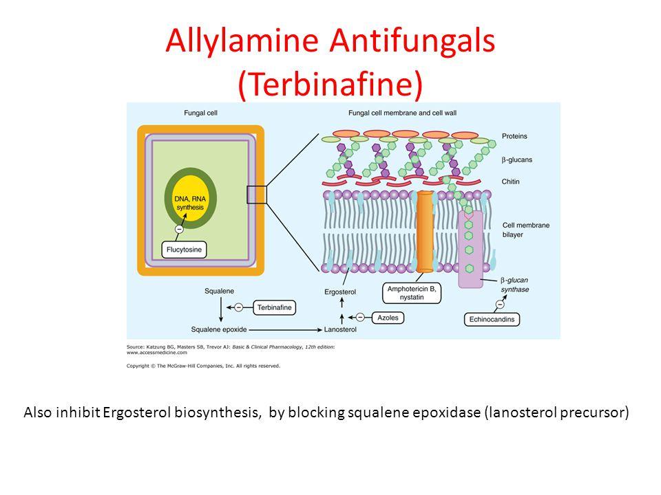Allylamine Antifungals (Terbinafine) Also inhibit Ergosterol biosynthesis, by blocking squalene epoxidase (lanosterol precursor)