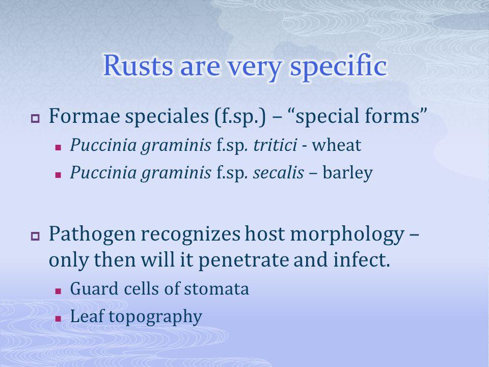  Formae speciales (f.sp.) – special forms Puccinia graminis f.sp.