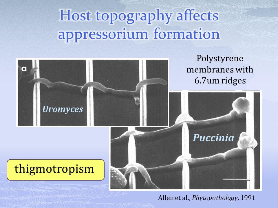 Allen et al., Phytopathology, 1991 Uromyces Puccinia Polystyrene membranes with 6.7um ridges thigmotropism