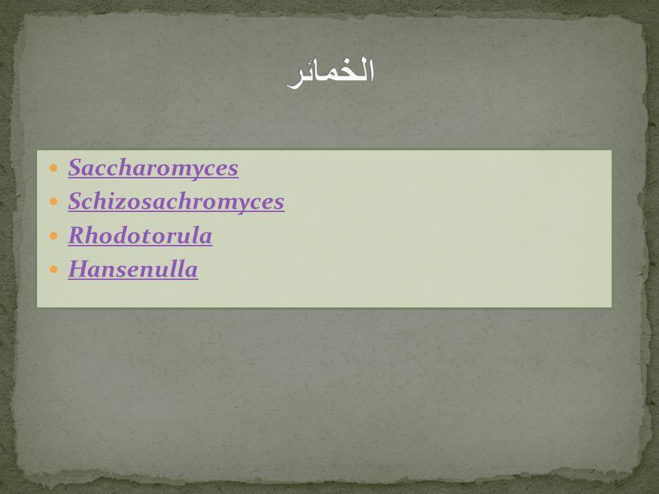 Saccharomyces Schizosachromyces Rhodotorula Hansenulla