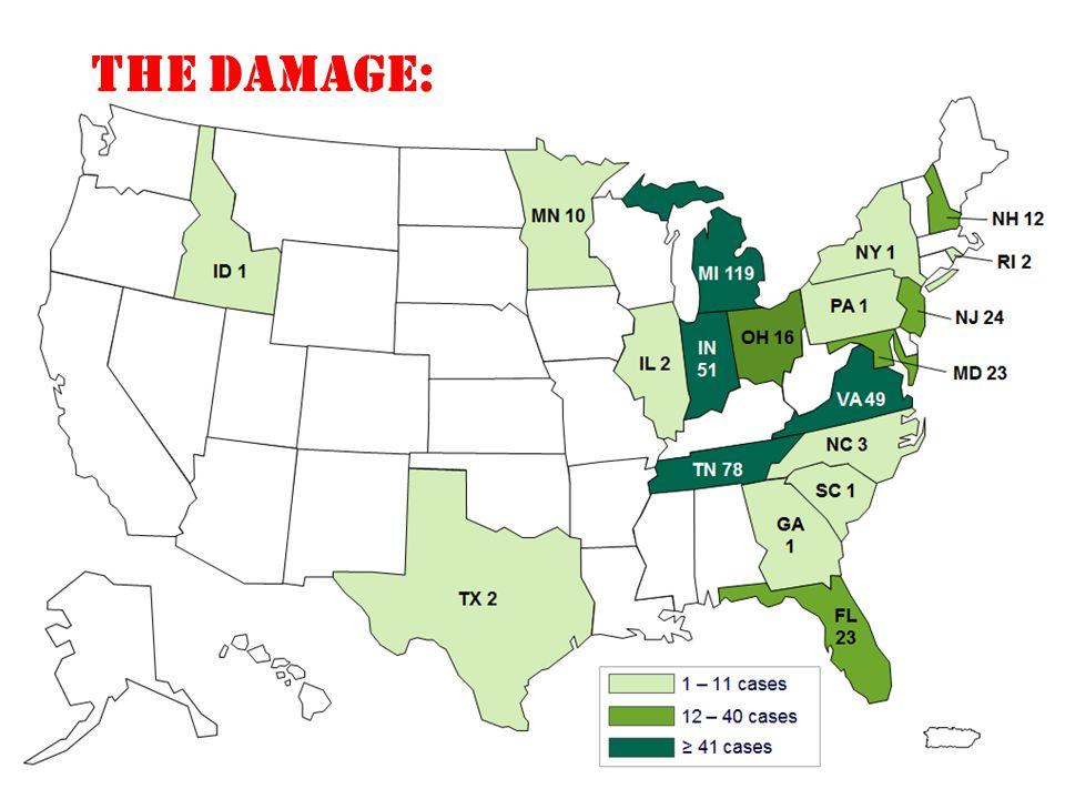 THE DAMAGE: