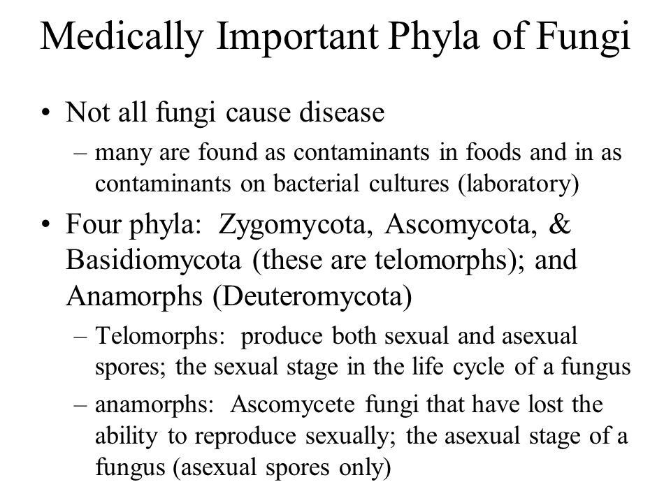 Medically Important Phyla of Fungi Not all fungi cause disease –many are found as contaminants in foods and in as contaminants on bacterial cultures (