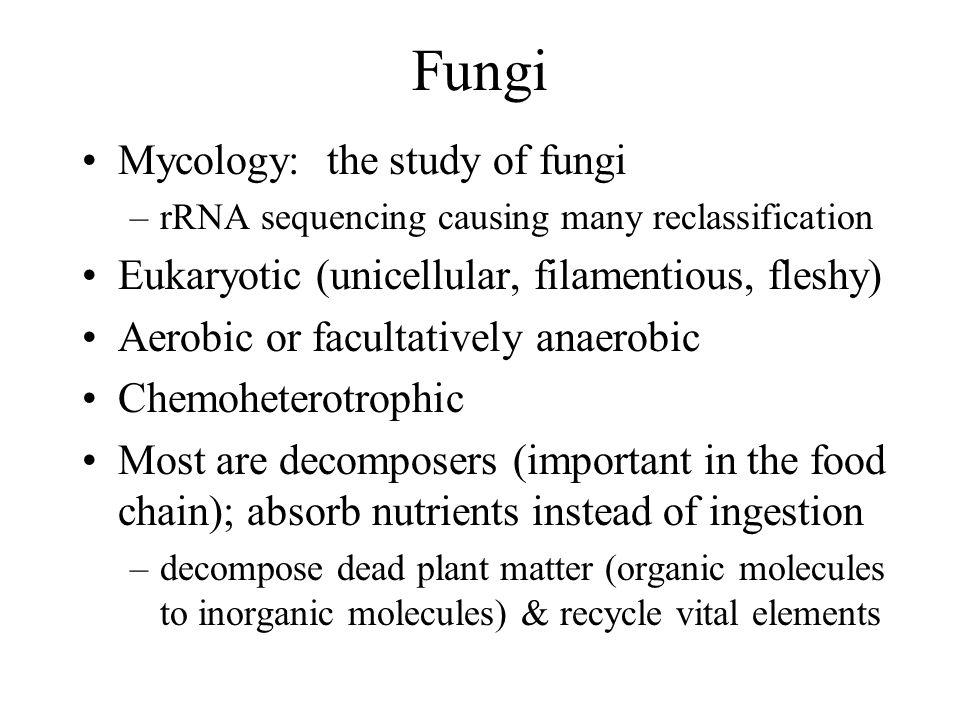 Zygomycete Life Cycle Figure 12.6