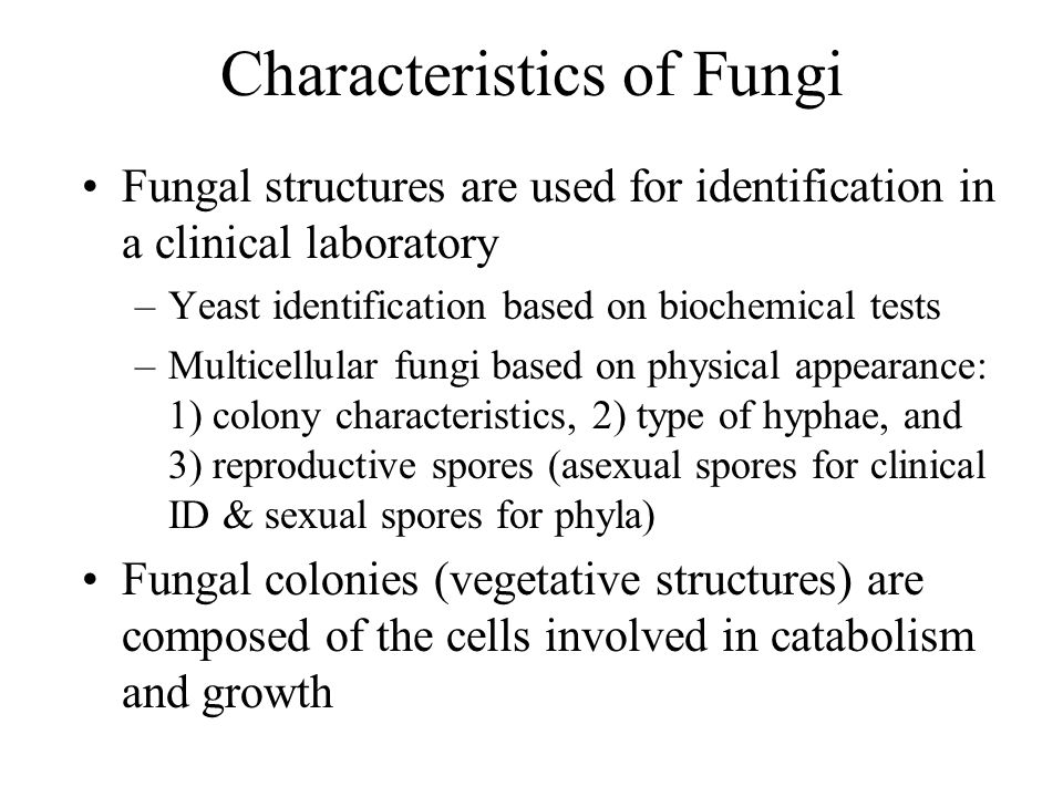 Results from sexual reproduction Three phases –PlasmogamyHaploid donor cell nucleus (+) penetrates cytoplasm of recipient cell (–) –Karyogamy+ and – nuclei fuse –MeiosisDiploid nucleus produces haploid nuclei (sexual spores) In laboratory setting, most fungi exhibit only asexual spores (used for clinical identification) Sexual spores