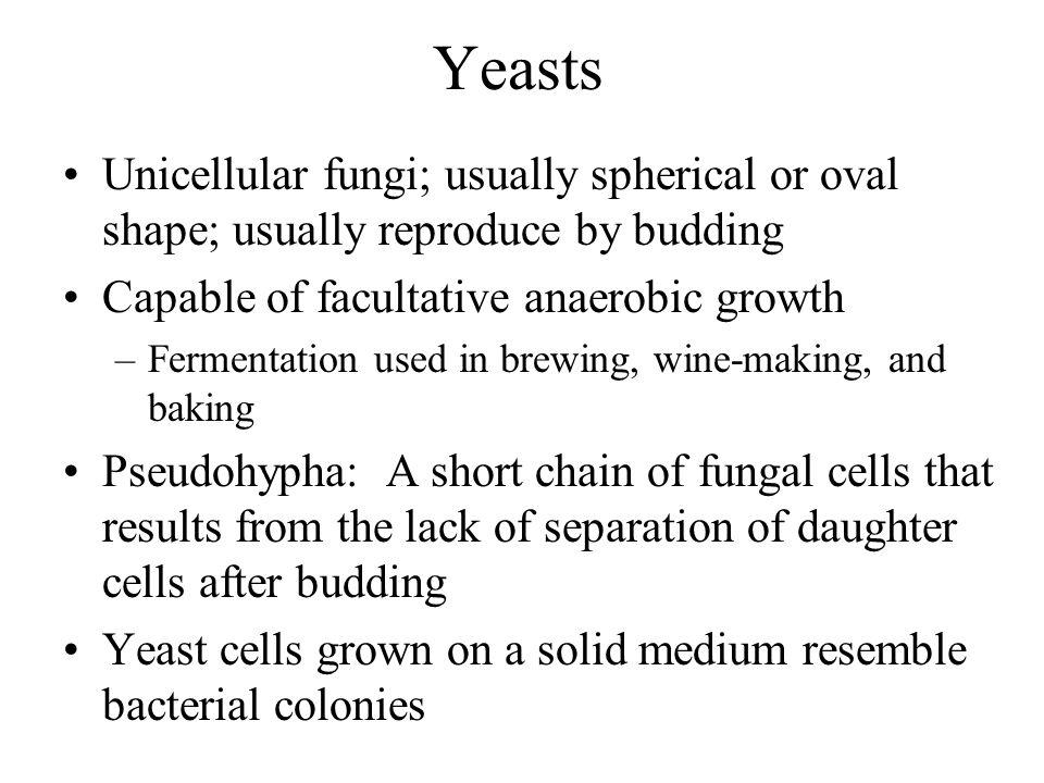 BasidiosporeFormed externally on a pedestal (basidium), e.g. mushrooms Sexual spores Figure 12.8