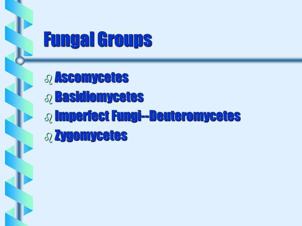 Fungal Groups b Ascomycetes b Basidiomycetes b Imperfect Fungi--Deuteromycetes b Zygomycetes