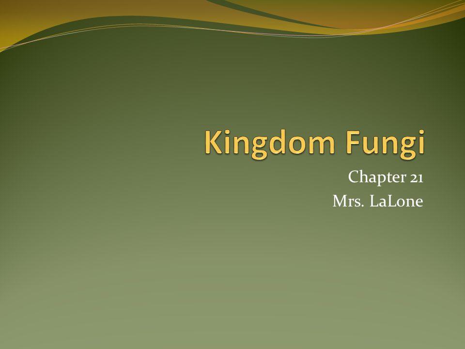 Kingdom Fungi Mycologists study fungus.