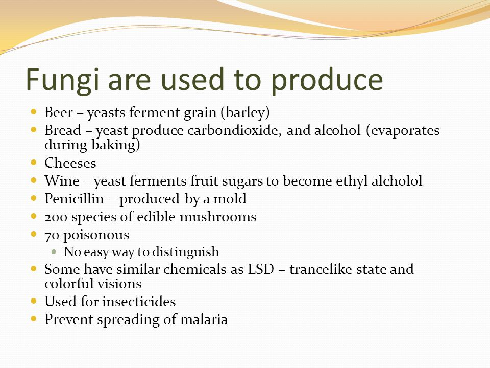 Fungi are used to produce Beer – yeasts ferment grain (barley) Bread – yeast produce carbondioxide, and alcohol (evaporates during baking) Cheeses Wine – yeast ferments fruit sugars to become ethyl alcholol Penicillin – produced by a mold 200 species of edible mushrooms 70 poisonous No easy way to distinguish Some have similar chemicals as LSD – trancelike state and colorful visions Used for insecticides Prevent spreading of malaria