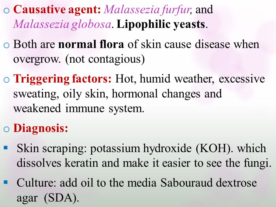 o Causative agent: Malassezia furfur, and Malassezia globosa. Lipophilic yeasts. o Both are normal flora of skin cause disease when overgrow. (not con