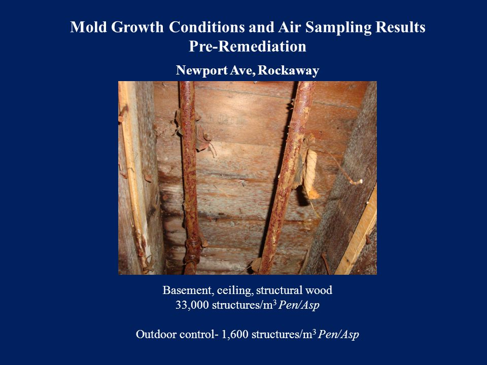 Mold Growth Conditions and Air Sampling Results Pre-Remediation Newport Ave, Rockaway Basement, ceiling, structural wood 33,000 structures/m 3 Pen/Asp