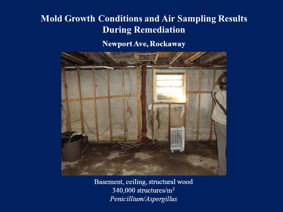 Mold Growth Conditions and Air Sampling Results During Remediation Newport Ave, Rockaway Basement, ceiling, structural wood 340,000 structures/m 3 Pen