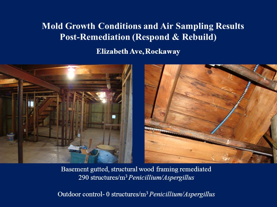 Basement gutted, structural wood framing remediated 290 structures/m 3 Penicillium/Aspergillus Outdoor control- 0 structures/m 3 Penicillium/Aspergill
