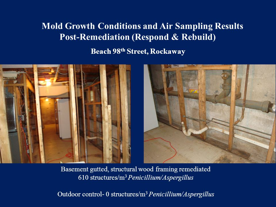 Basement gutted, structural wood framing remediated 610 structures/m 3 Penicillium/Aspergillus Outdoor control- 0 structures/m 3 Penicillium/Aspergill