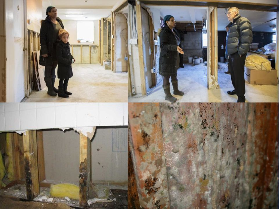 Mold growth- structural & non- structural wood components - basement Beach 141 Street, Rockaway Dec 5, 2012