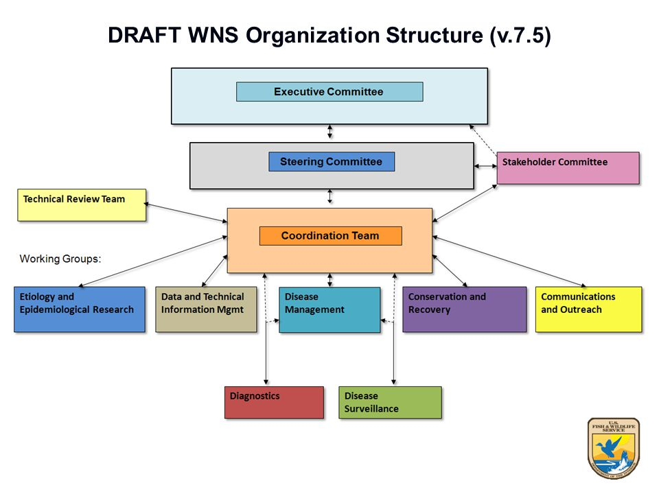 DRAFT WNS Organization Structure (v.7.5)