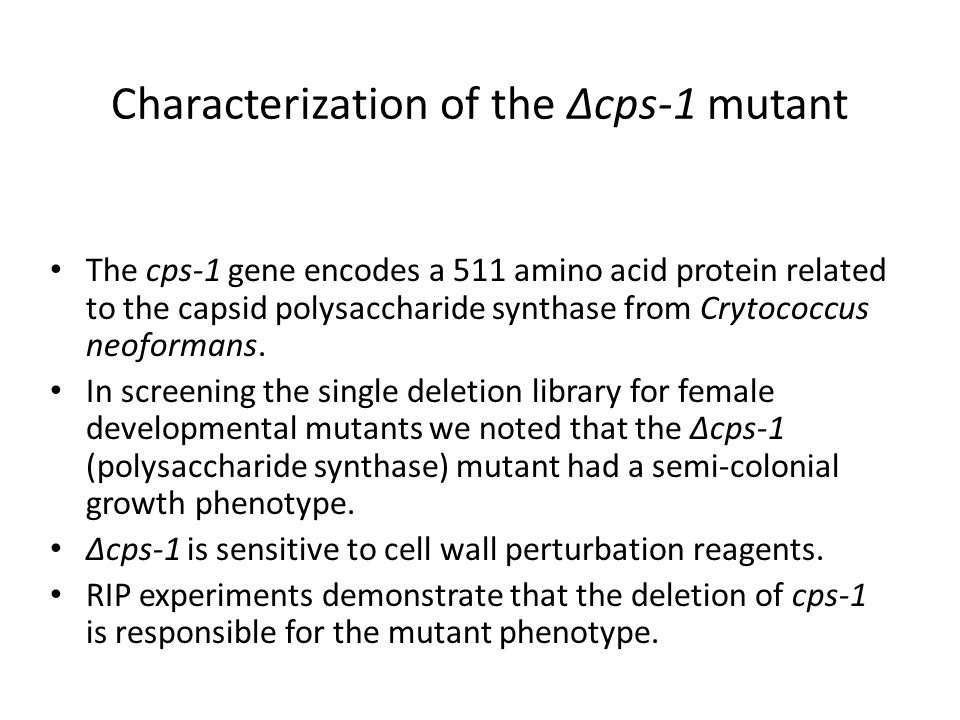 Characterization of the Δcps-1 mutant The cps-1 gene encodes a 511 amino acid protein related to the capsid polysaccharide synthase from Crytococcus neoformans.