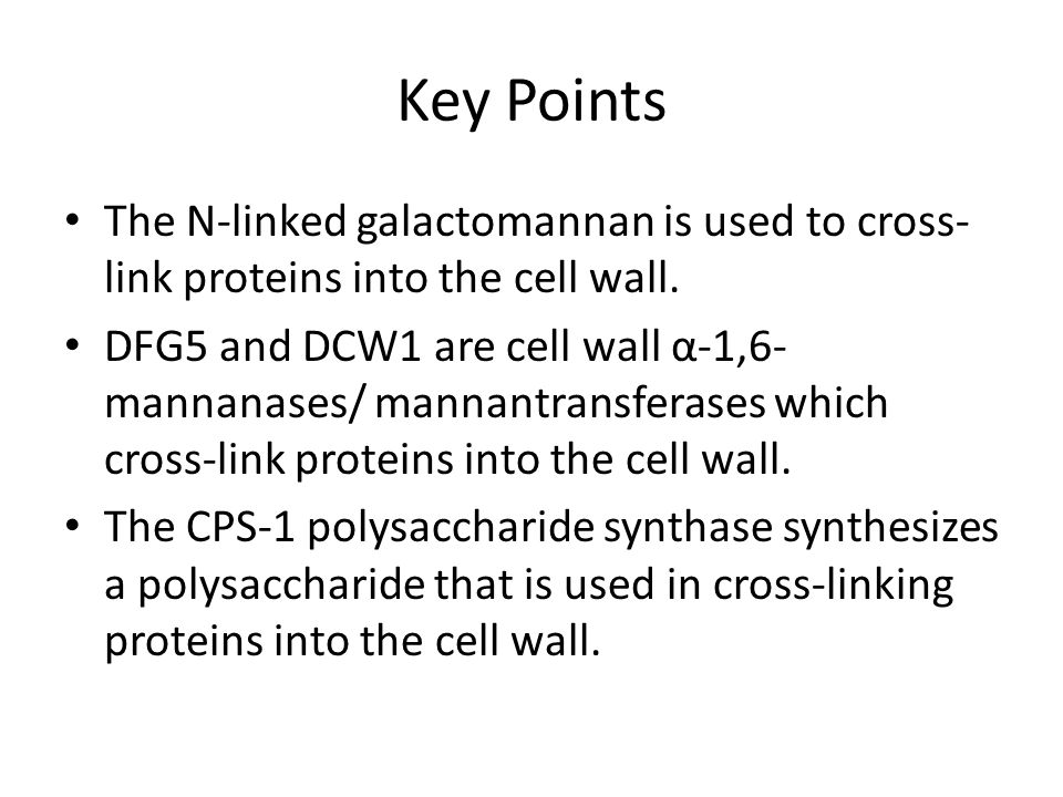 Key Points The N-linked galactomannan is used to cross- link proteins into the cell wall.