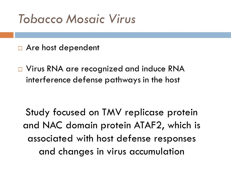 Tobacco Mosaic Virus  Are host dependent  Virus RNA are recognized and induce RNA interference defense pathways in the host Study focused on TMV replicase protein and NAC domain protein ATAF2, which is associated with host defense responses and changes in virus accumulation