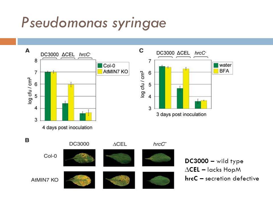 Pseudomonas syringae DC3000 – wild type ∆CEL – lacks HopM hrcC – secretion defective
