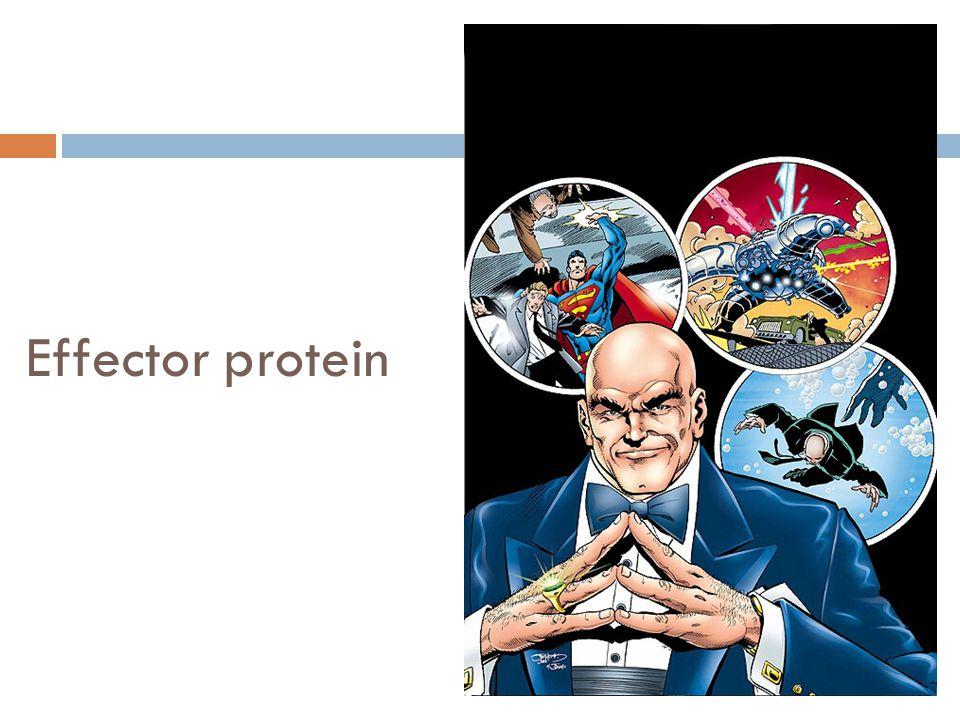 Effector protein