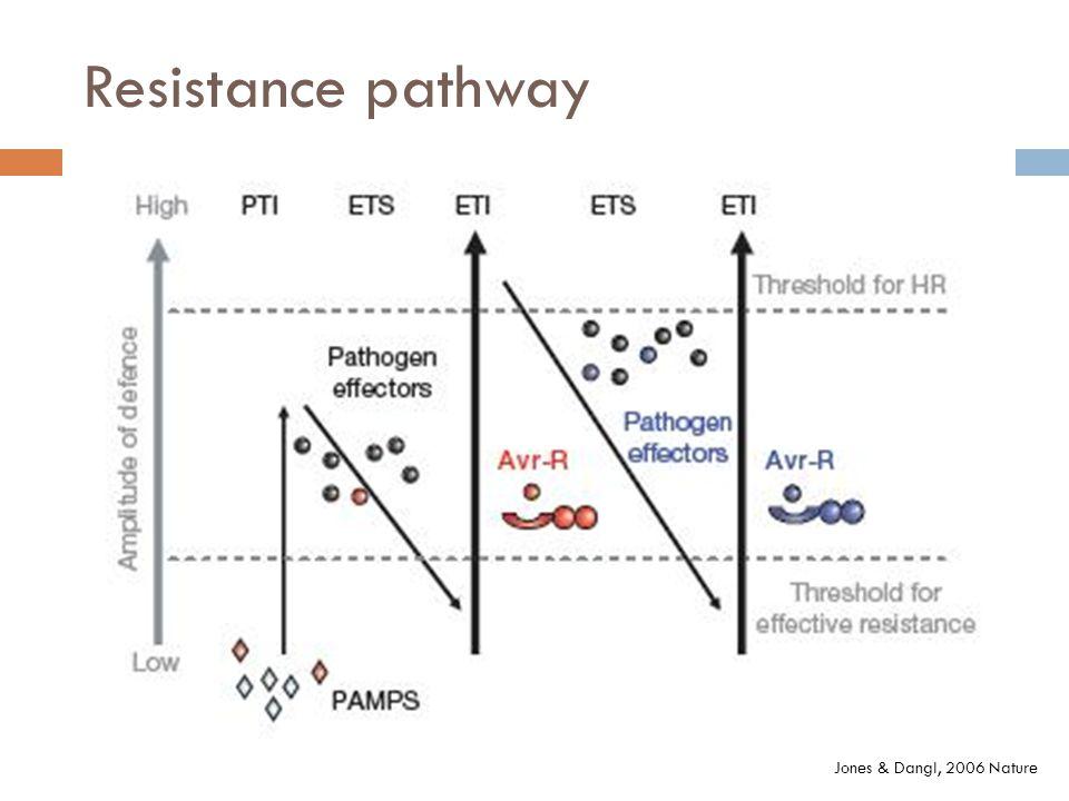 Resistance pathway Jones & Dangl, 2006 Nature