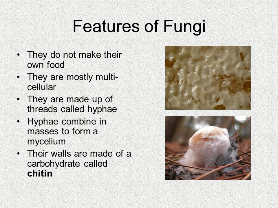 Features of Fungi They do not make their own food They are mostly multi- cellular They are made up of threads called hyphae Hyphae combine in masses t