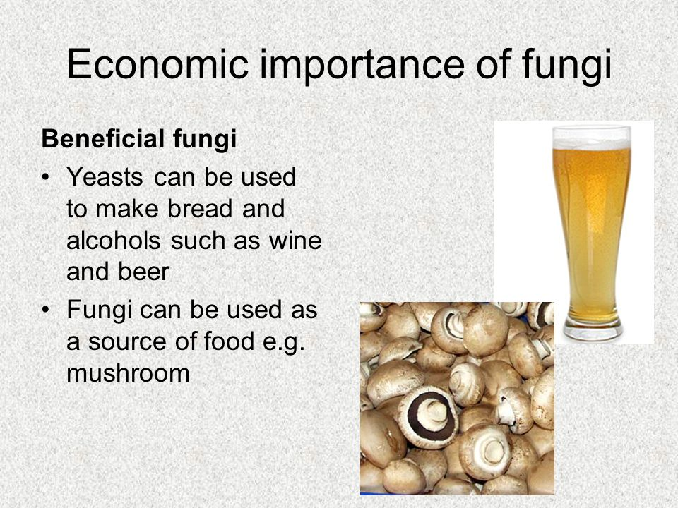 Economic importance of fungi Beneficial fungi Yeasts can be used to make bread and alcohols such as wine and beer Fungi can be used as a source of foo