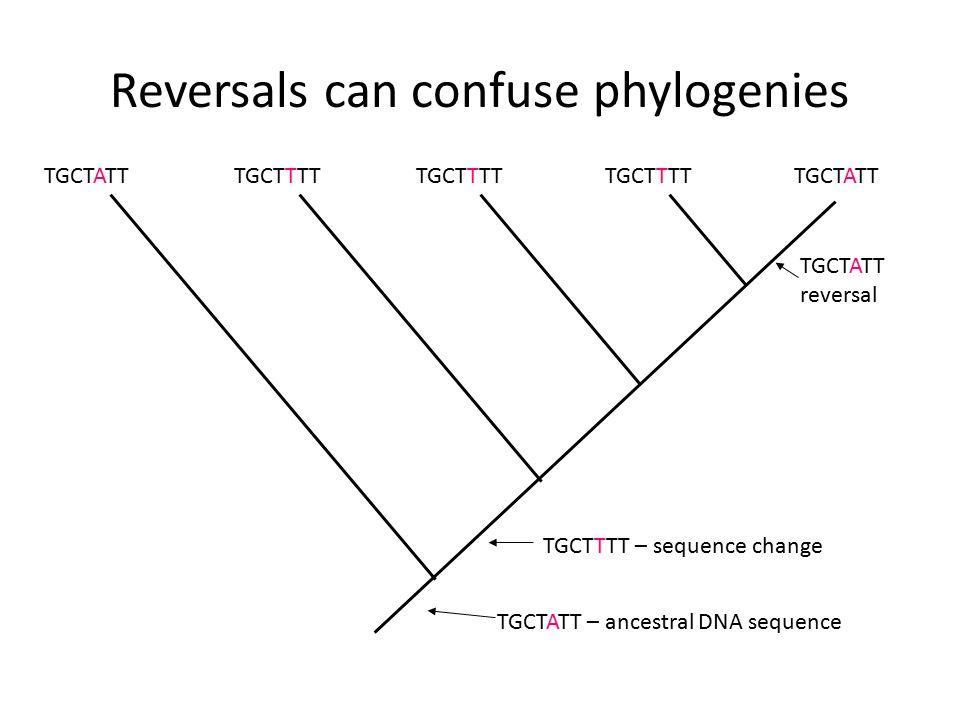 Reversals can confuse phylogenies TGCTATT TGCTTTT TGCTATT – ancestral DNA sequence TGCTTTT – sequence change TGCTATT reversal