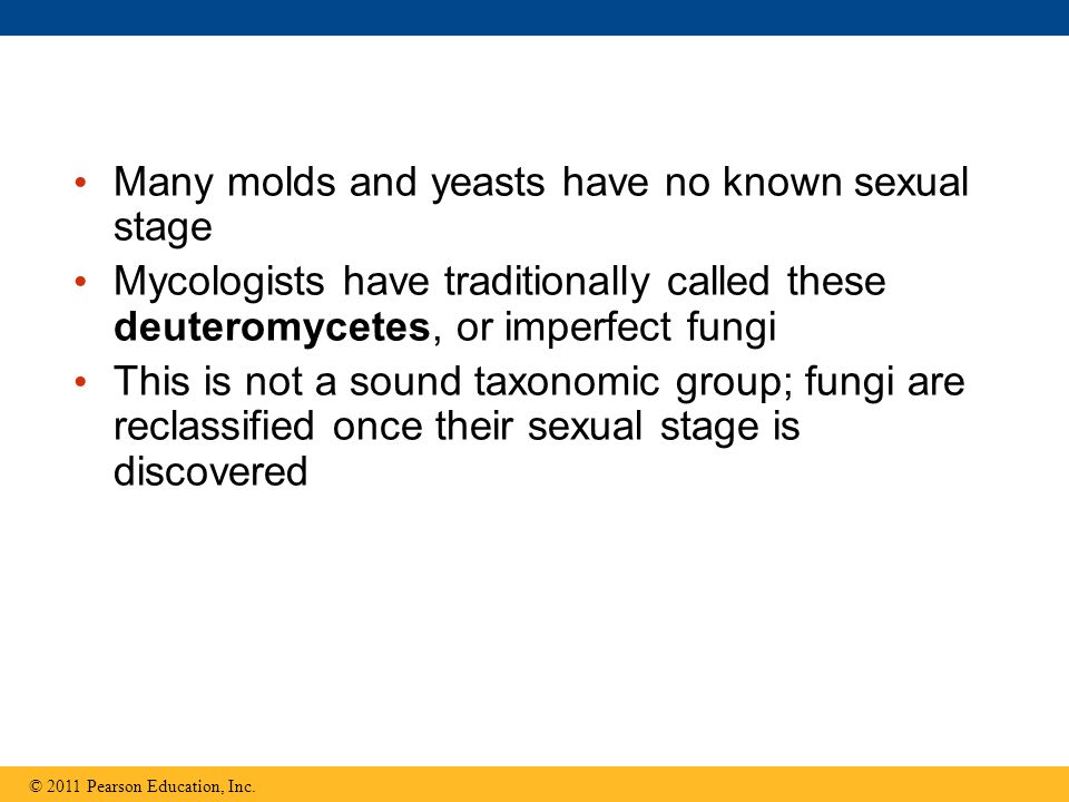 Many molds and yeasts have no known sexual stage Mycologists have traditionally called these deuteromycetes, or imperfect fungi This is not a sound taxonomic group; fungi are reclassified once their sexual stage is discovered © 2011 Pearson Education, Inc.