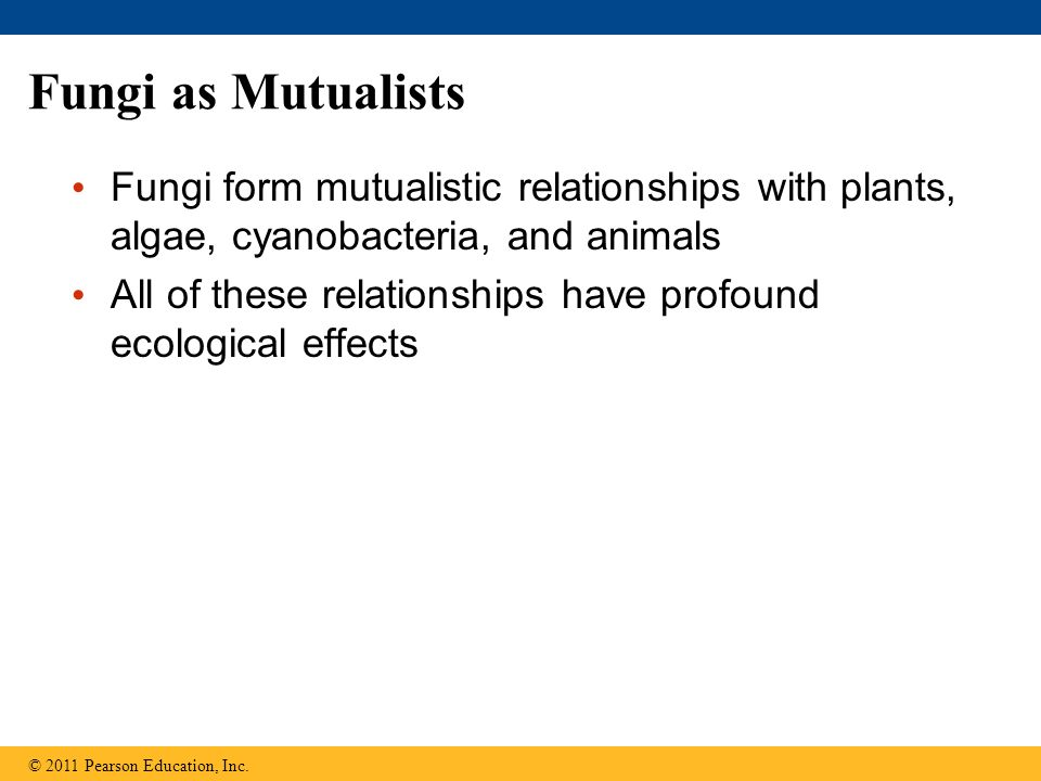 Fungi as Mutualists Fungi form mutualistic relationships with plants, algae, cyanobacteria, and animals All of these relationships have profound ecological effects © 2011 Pearson Education, Inc.
