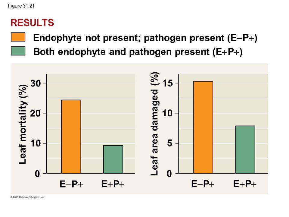 Figure 31.21 Endophyte not present; pathogen present (E  P  ) Both endophyte and pathogen present (E  P  ) EPEP EPEP EPEP EPEP 30