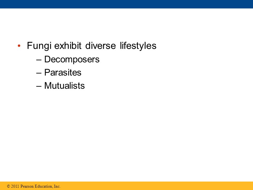 Fungi exhibit diverse lifestyles –Decomposers –Parasites –Mutualists © 2011 Pearson Education, Inc.