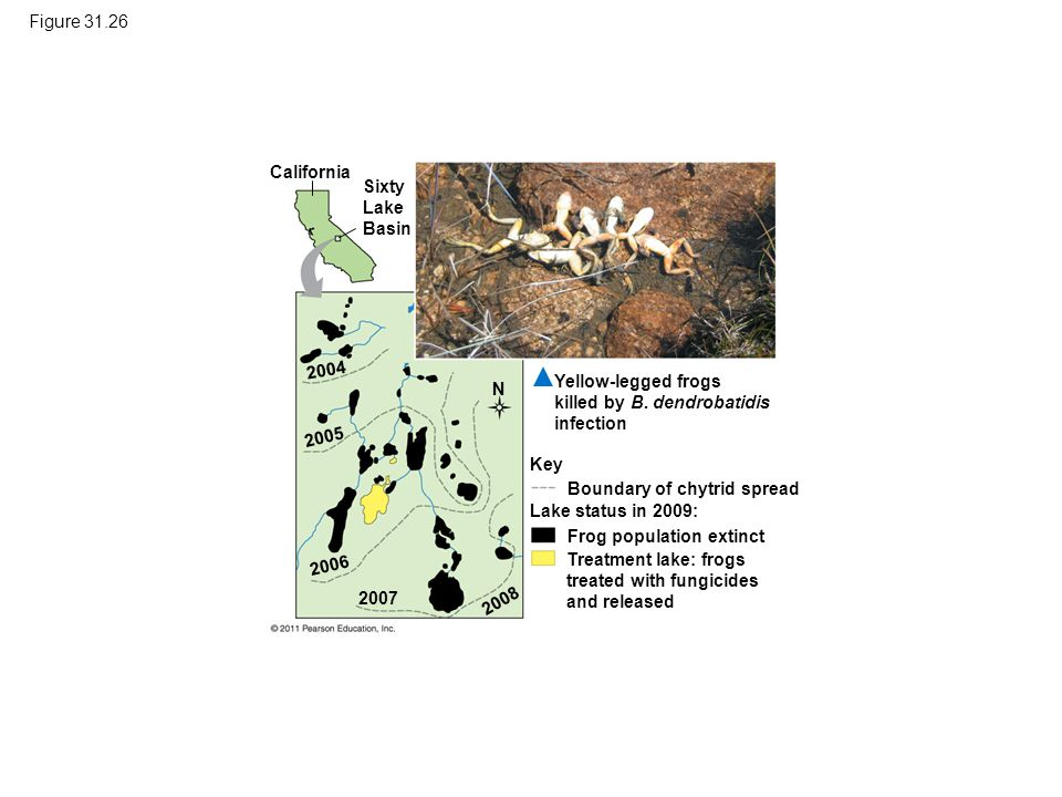 Figure 31.26 California Sixty Lake Basin Yellow-legged frogs killed by B. dendrobatidis infection Key Boundary of chytrid spread Lake status in 2009:
