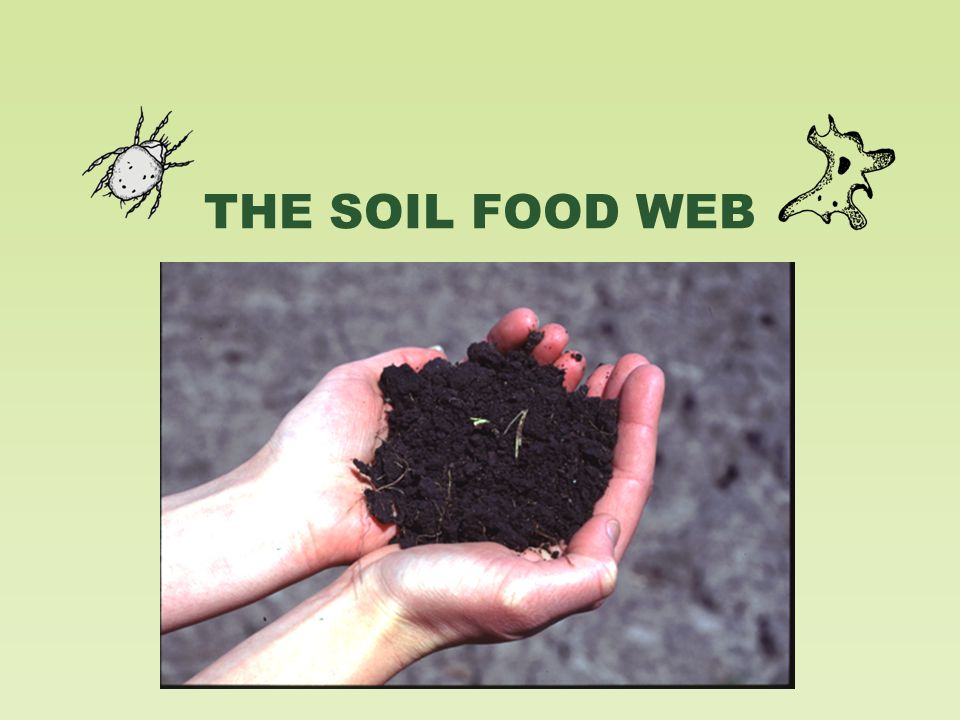Soil Biology and the Landscape