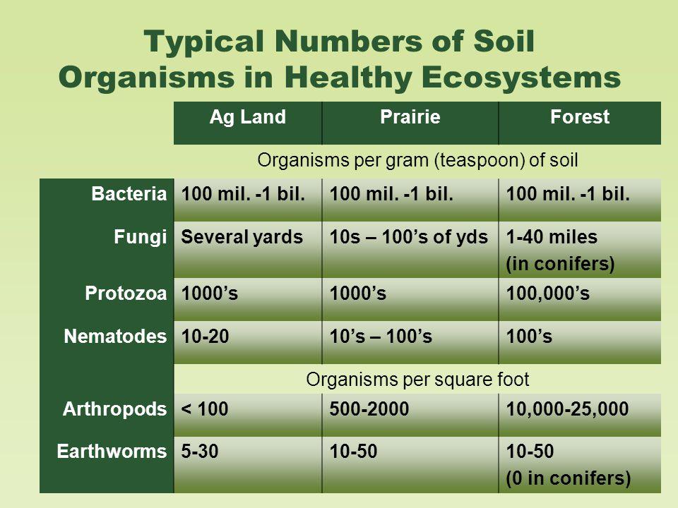 Typical Numbers of Soil Organisms in Healthy Ecosystems Ag LandPrairieForest Organisms per gram (teaspoon) of soil Bacteria100 mil.