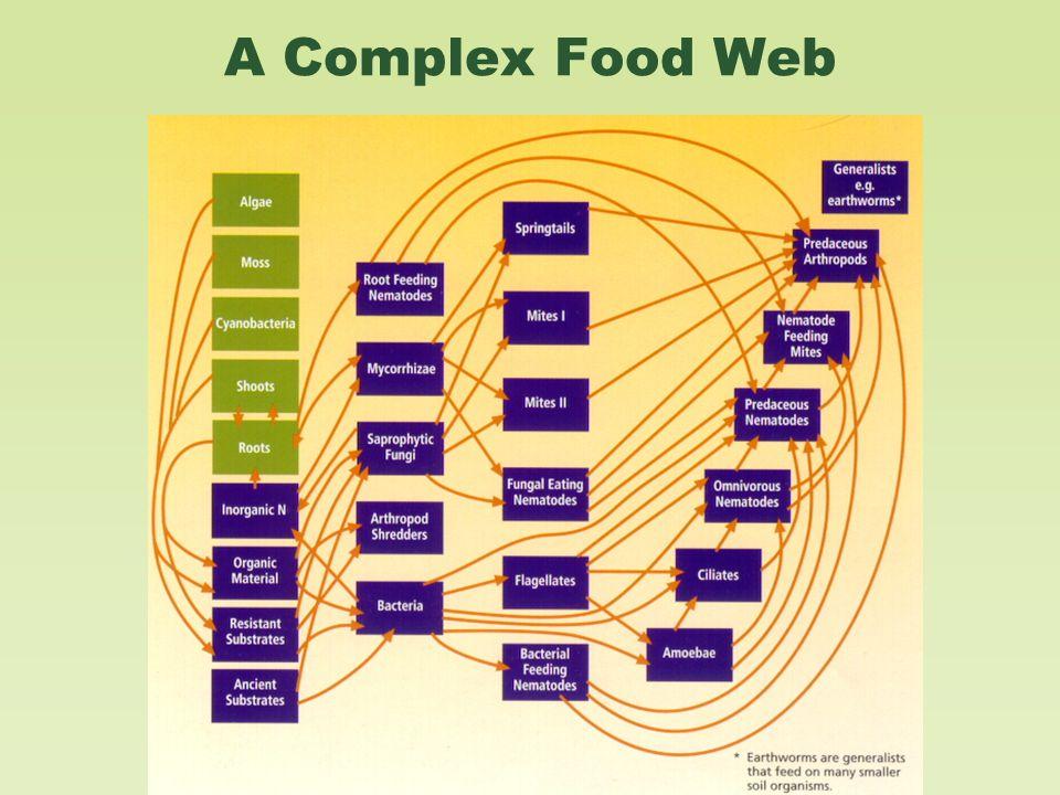 A Complex Food Web