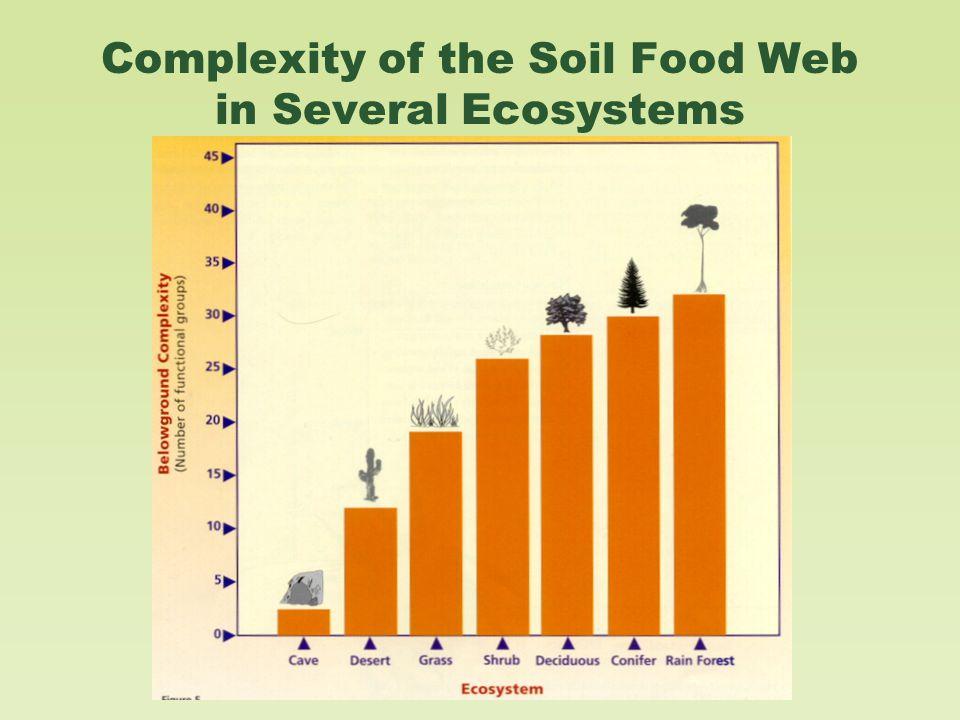 Complexity of the Soil Food Web in Several Ecosystems